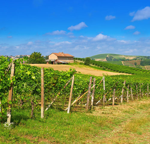 Barbaresco Wine Tour